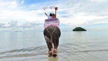 Krabi Beach Elephant Marriage