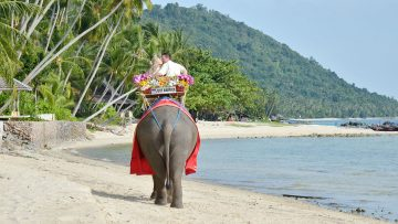 Samui Elephant Marriage Package