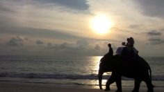 Phuket Beach Elephant Wedding