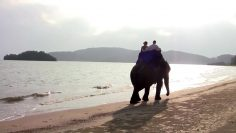 Krabi Elephant Marriage Package