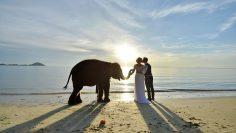 Samui Secular Marriage Package