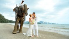 Krabi Elephant Marriage Package
