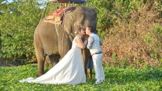 Koh Lanta Elephant Marriage